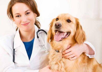 visitas al veterinario principal