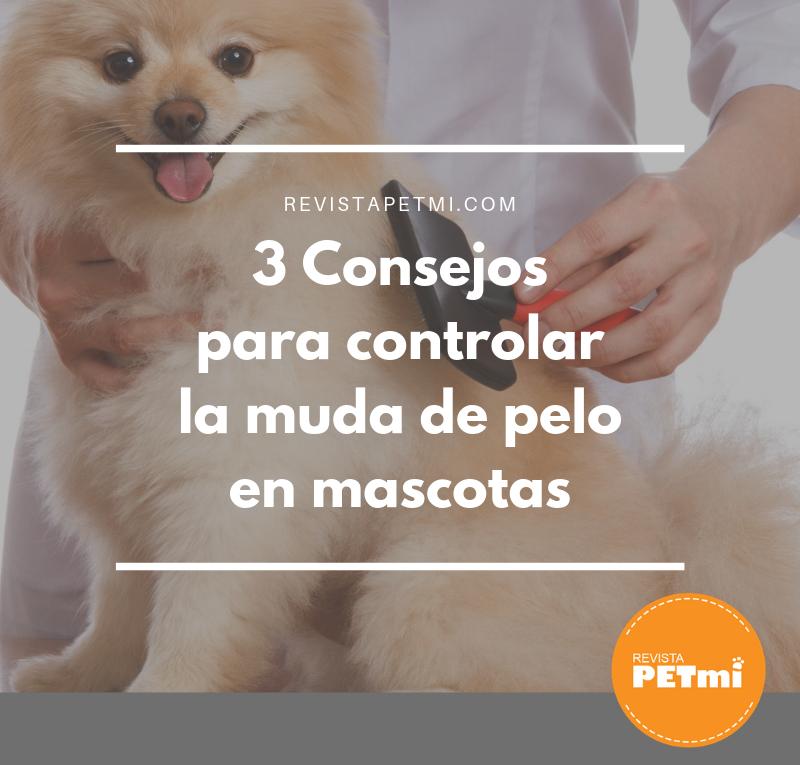 3 Consejos para controlar la muda de pelo en mascotas (1)