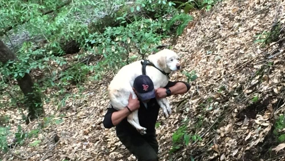 Bombero encuentra a perro ciego 1