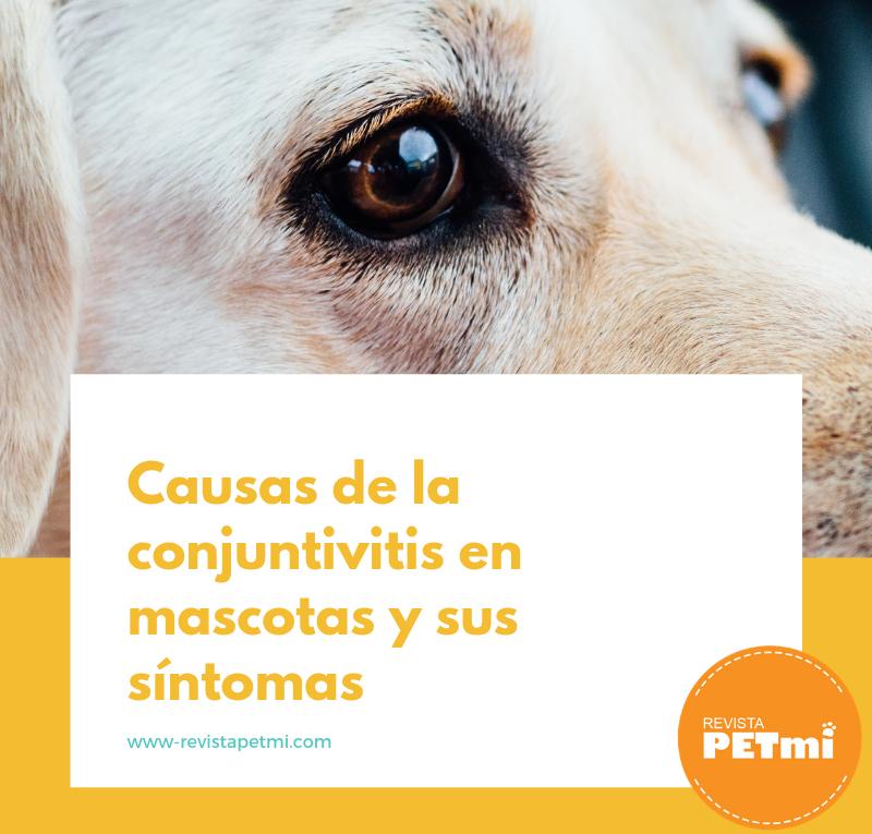 Causas de la conjuntivitis en mascotas y sus síntomas