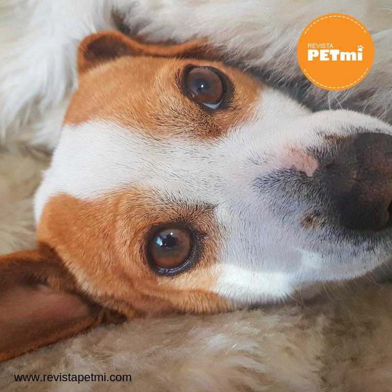 Causas de la conjuntivitis en mascotas y sus síntomas (1)