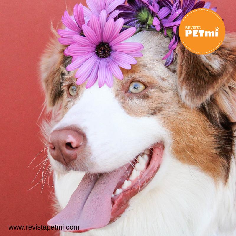 Causas de la conjuntivitis en mascotas y sus síntomas (2)