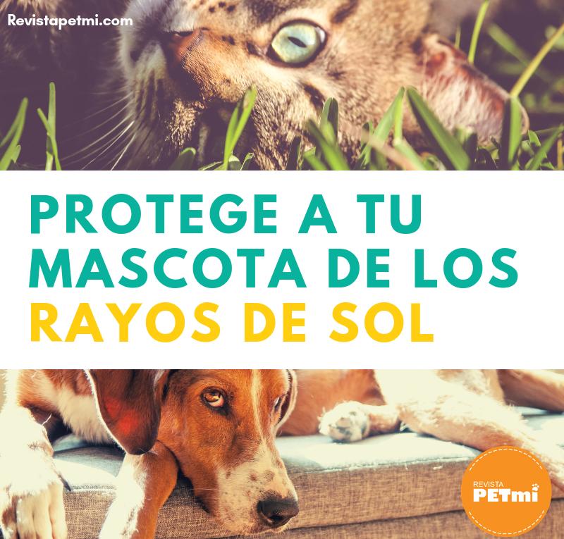 Protege a tu mascota de los rayos de sol