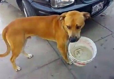 Perro protege su balde de agua