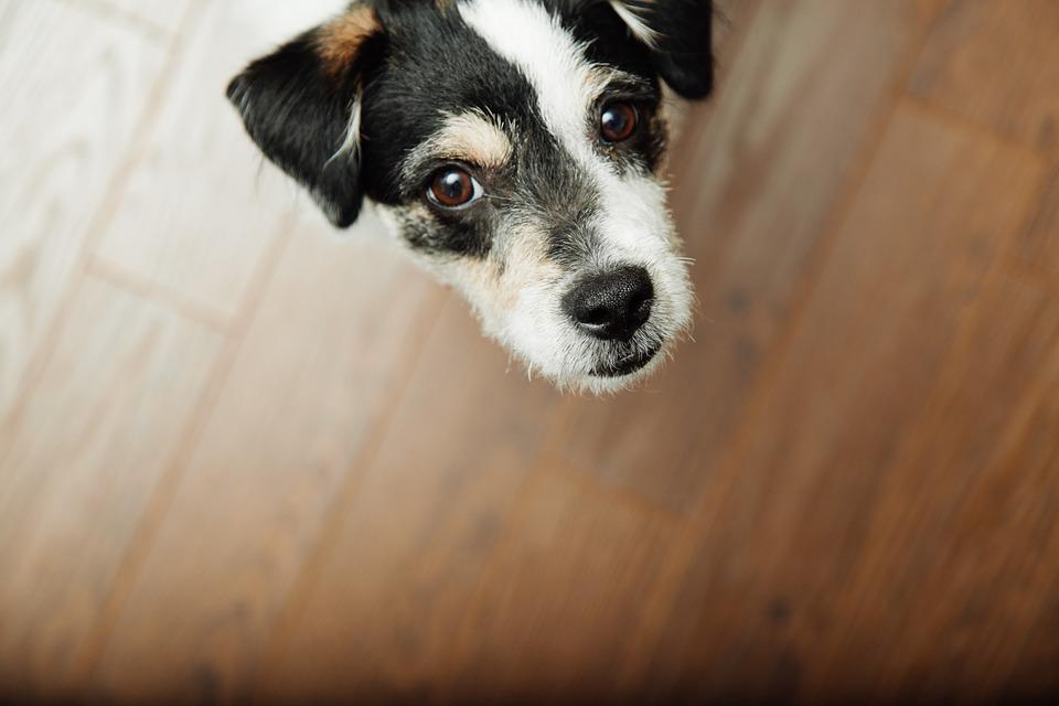 intuición canina, lo que tu perro sabe de ti