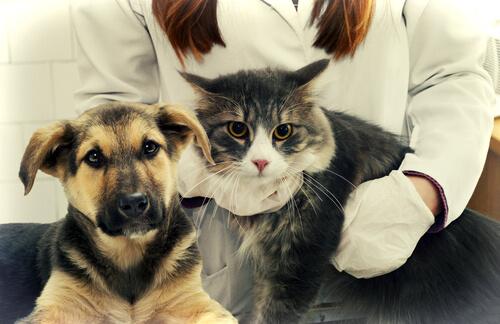 perro-gato-veterinario