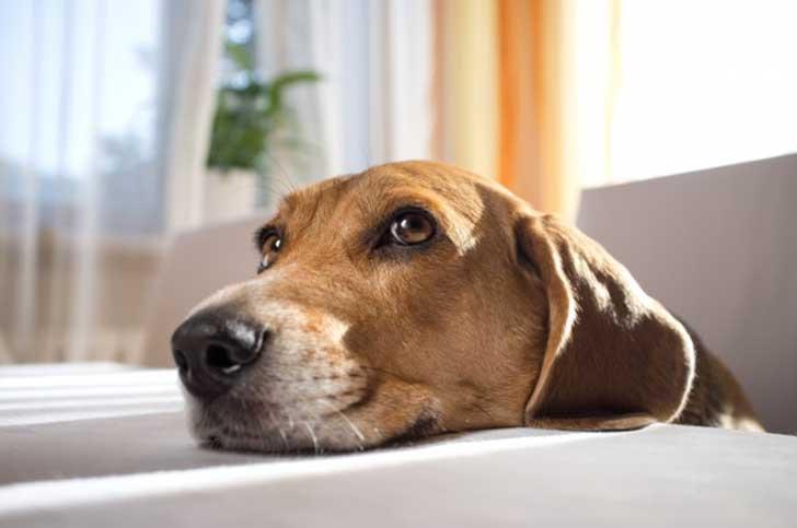 tu perro sabe quién es malo
