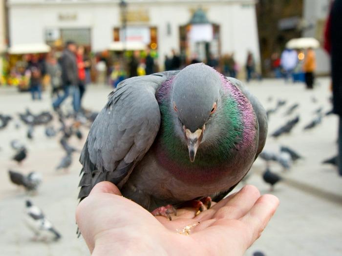 Pájaro Herido 2