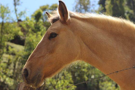 Equinos en Guatemala 1