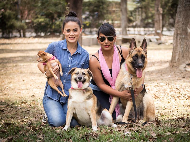 Cuarta Feria Municipal de Adopción de Mascotas 1