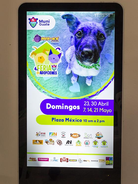 Cuarta Feria Municipal de Adopción de Mascotas 5
