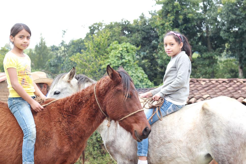 Equinos en Guatemala
