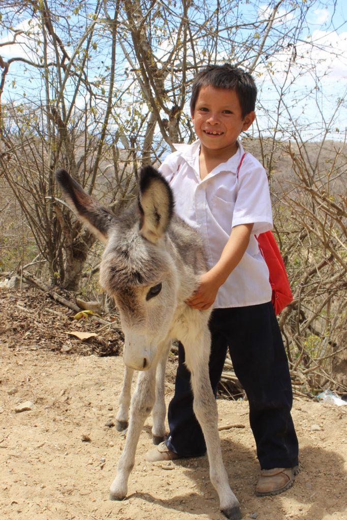 Equinos en Guatemala 3