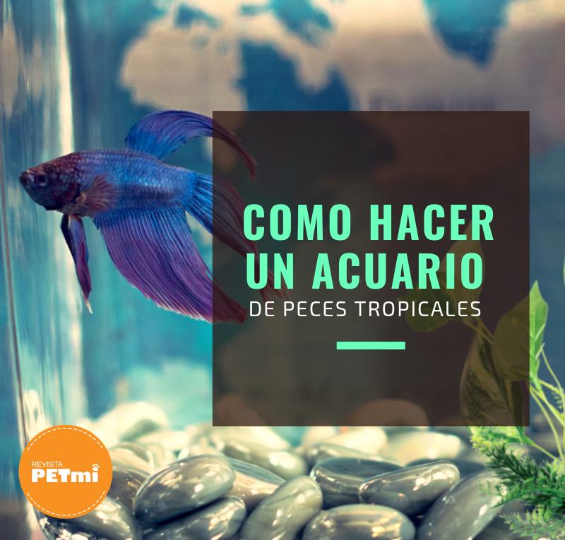 Como hacer un acuario de peces tropicales