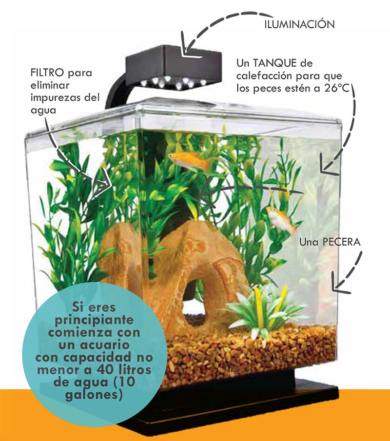 Como hacer un acuario de peces tropicales en agua dulce for Peces para pecera