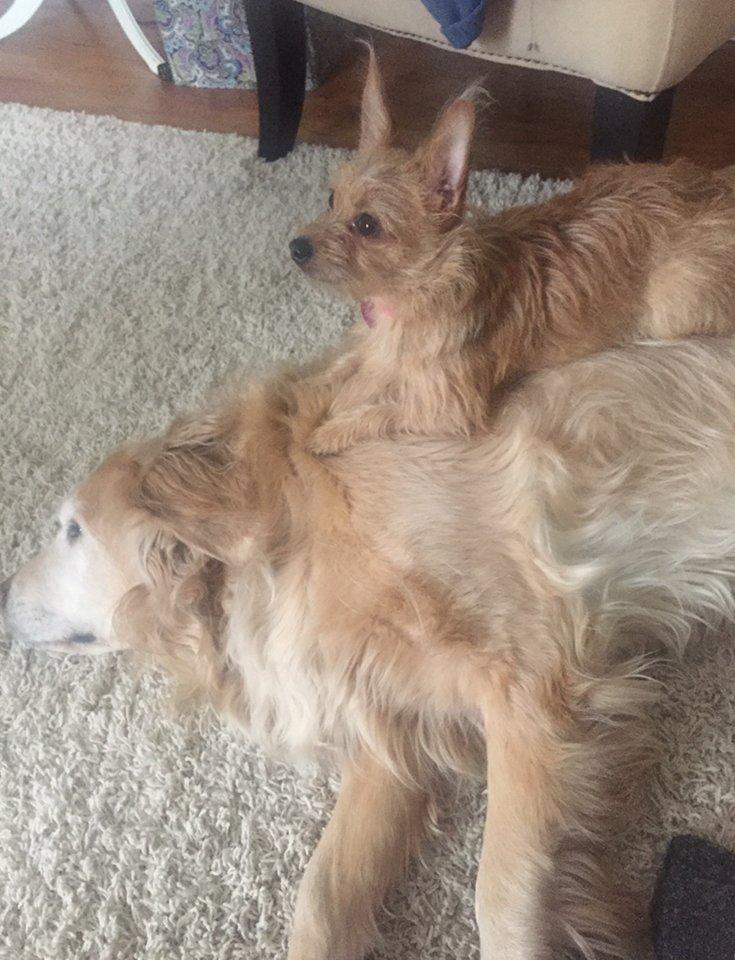 Bella se aprovecha de su amigote para hacer sus travesuras 2