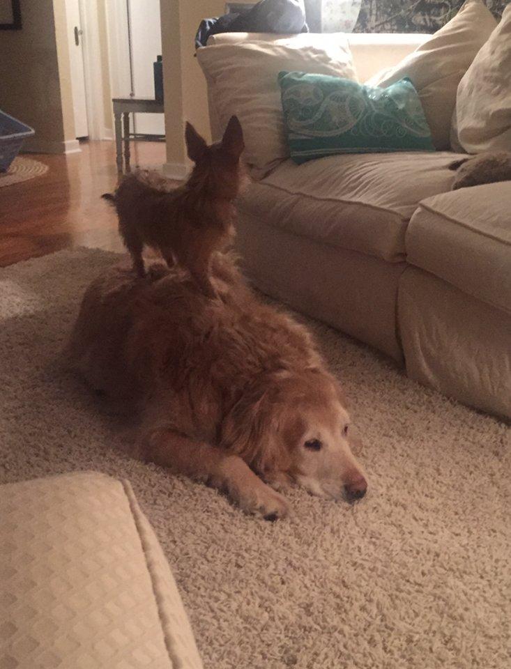 Bella se aprovecha de su amigote para hacer sus travesuras 1