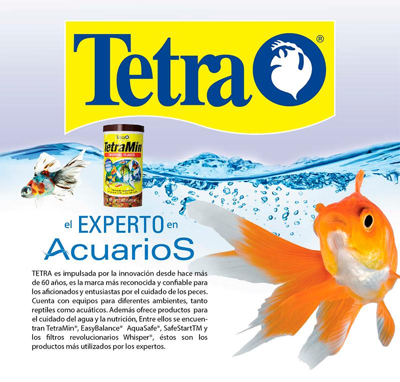 acuario de peces tropicales