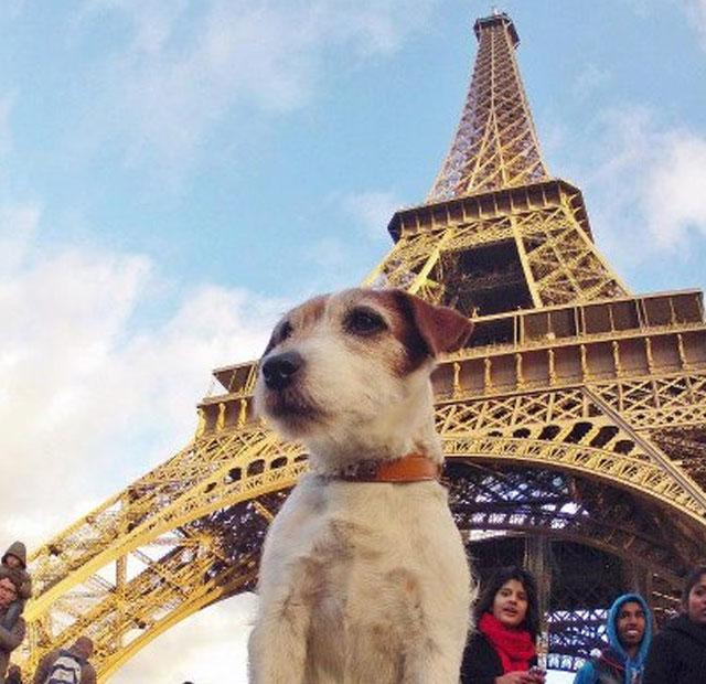 ciudades donde los perros viven en un verdadero edén 1