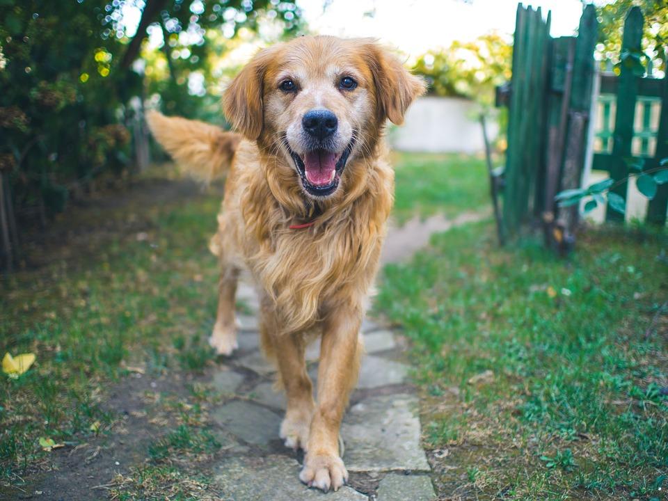 ciudades donde los perros viven en un verdadero edén