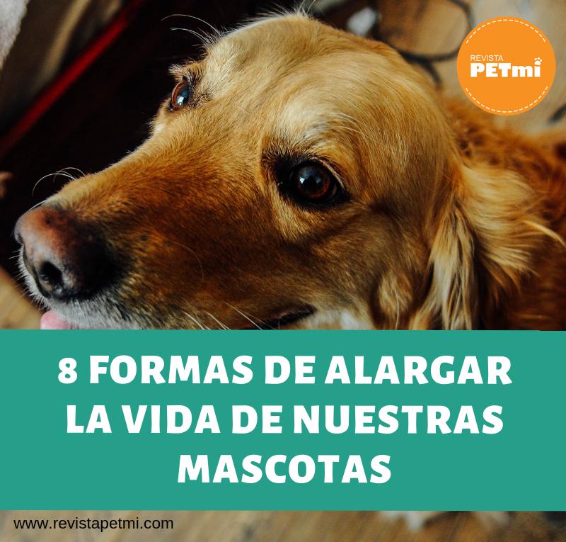 8 formas de alargar la vida de nuestras mascotas