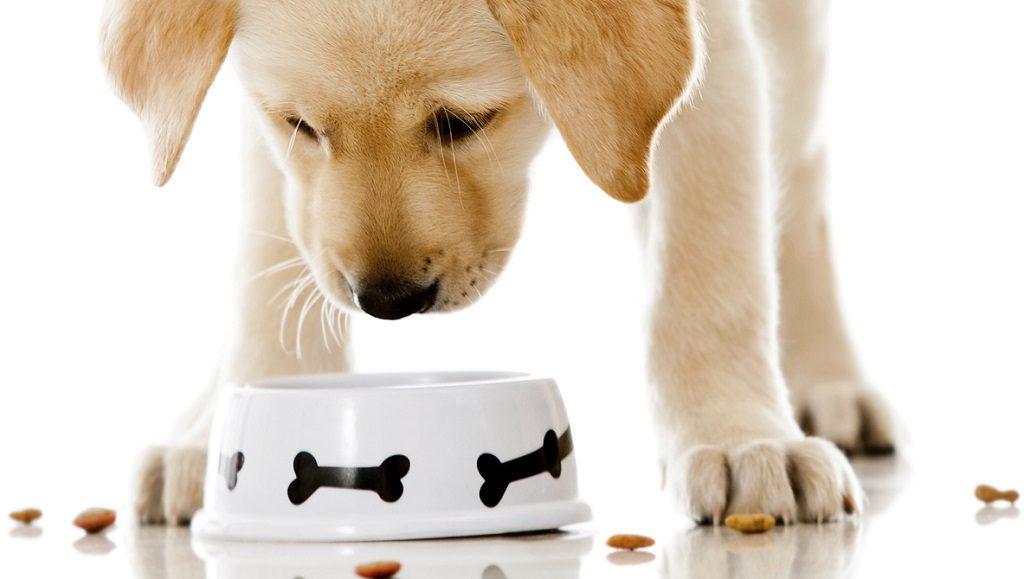 alargar la bida de tu mascota