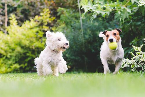 alargar la vida de tu mascota