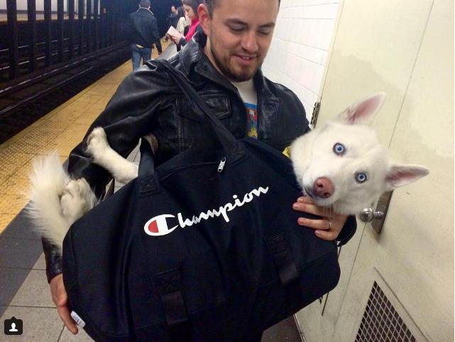El metro de NY prohíbe la entrada a los perros 4