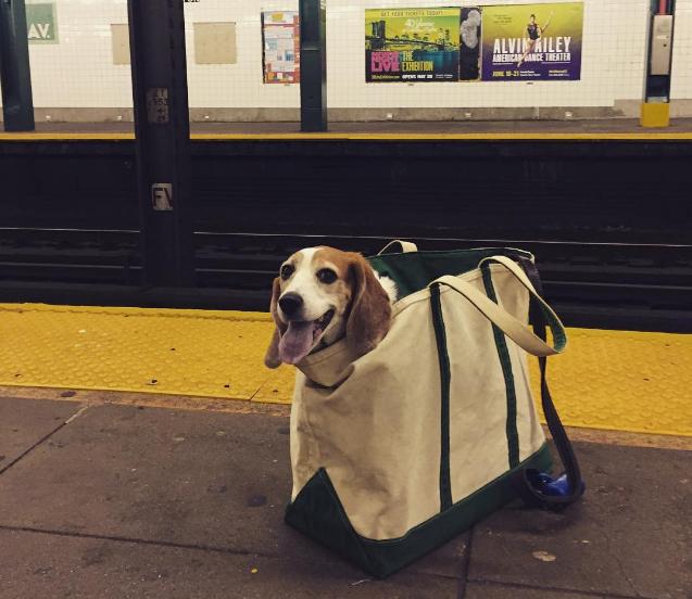 El metro de NY prohíbe la entrada a los perros 1