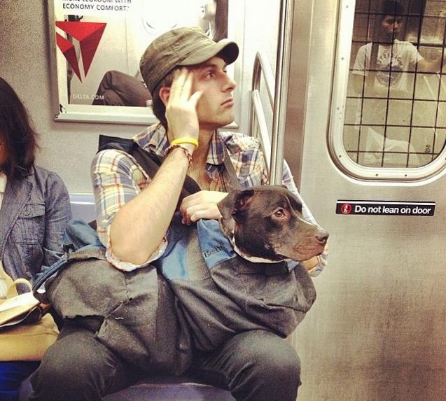 El metro de NY prohíbe la entrada a los perros 2