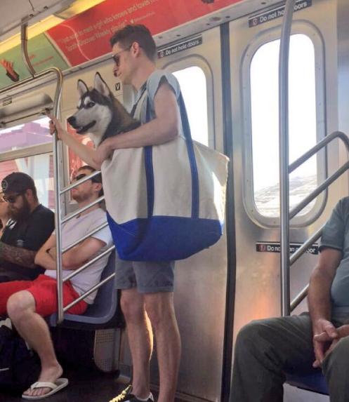 El metro de NY prohíbe la entrada a los perros 3