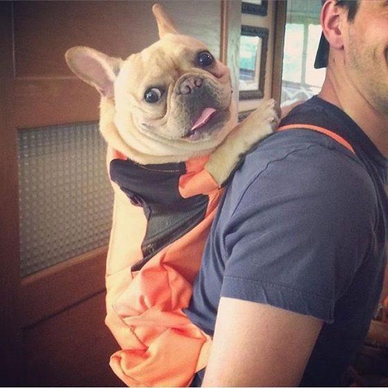 El metro de NY prohíbe la entrada a los perros
