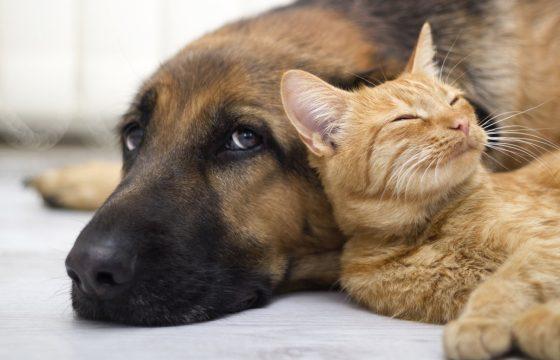 diarrea en perros y gatos