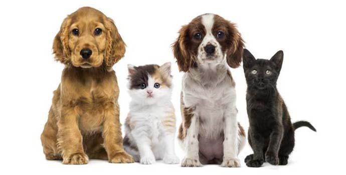 diarrea en mascotas