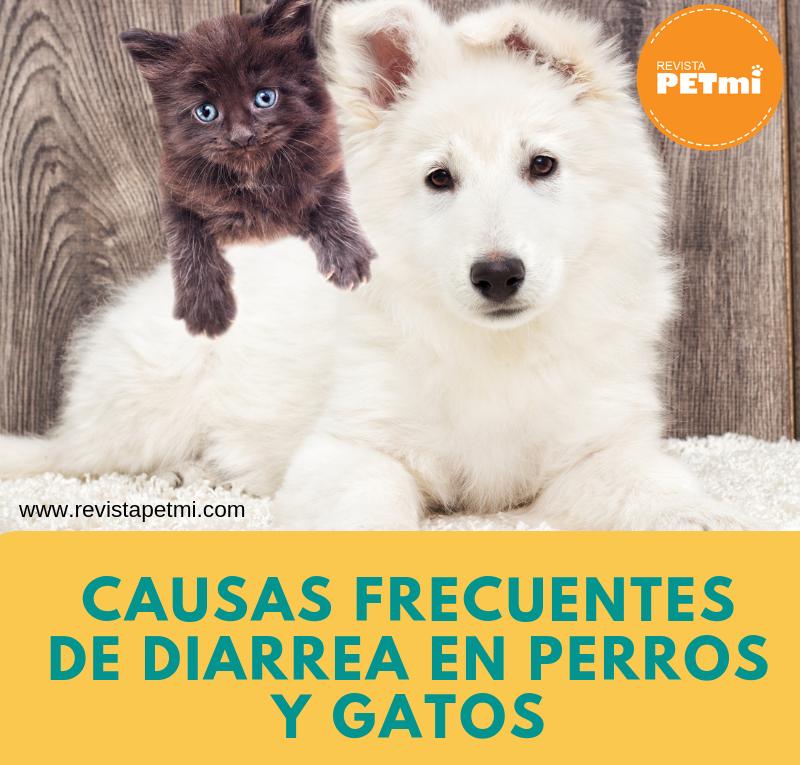 diarrea en perros y gatos (3)