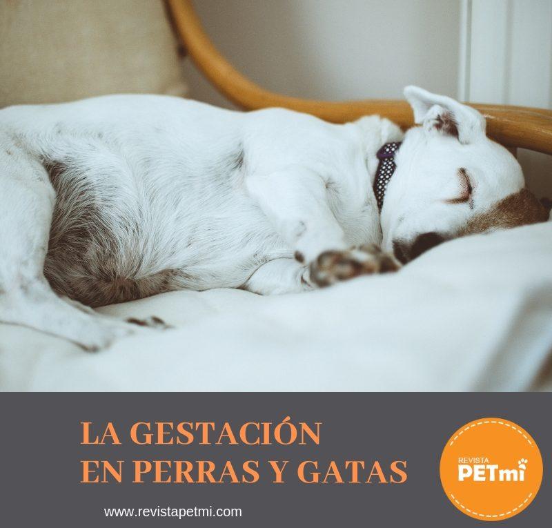 La Gestación en Perras y Gatas1