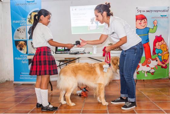 tenencia responsable de mascotas guatemala
