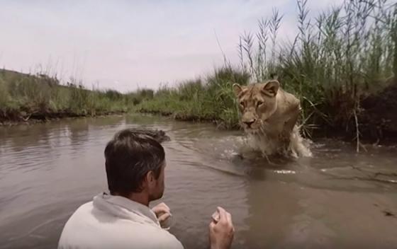 emotivo reencuentro leona y su rescatista