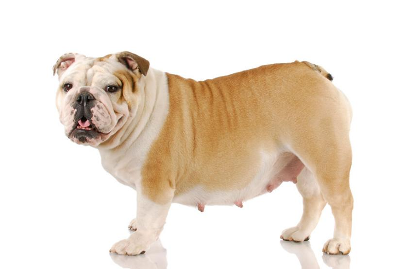 ===Hermano Perro...=== Gestaci%C3%B3n-de-perros-y-gatos