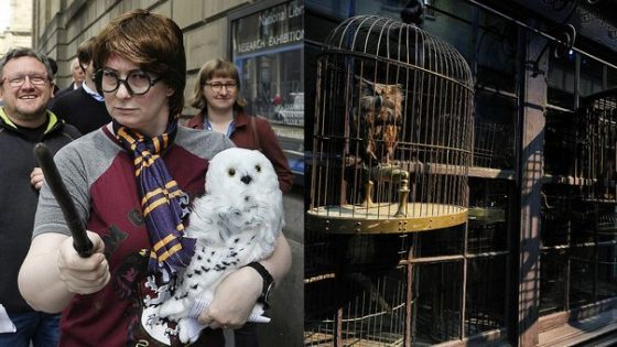 Harry Potter - Búho
