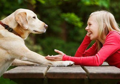 10 años podremos hablar con nuestras mascotas