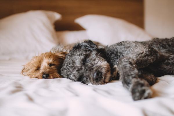¿Por qué dormir con mi mascota puede mejorar la calidad del sueño?