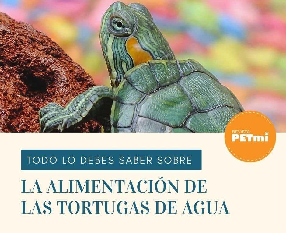 La alimentación de las Tortugas de Agua (3)-compressed