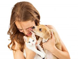 quién es mas inteligente, el perro o gato
