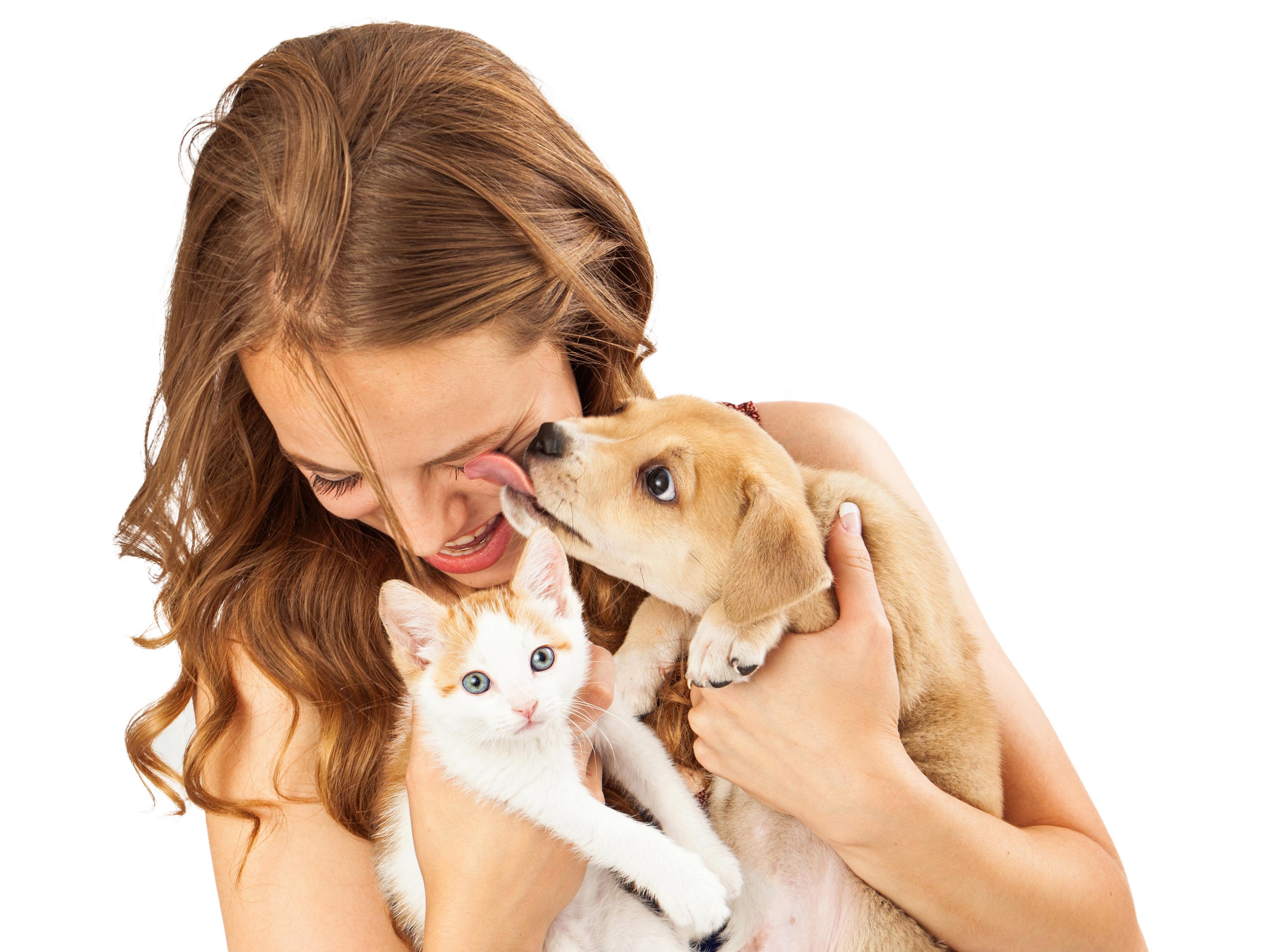 ¿Quién es más inteligente los perros o gatos ?