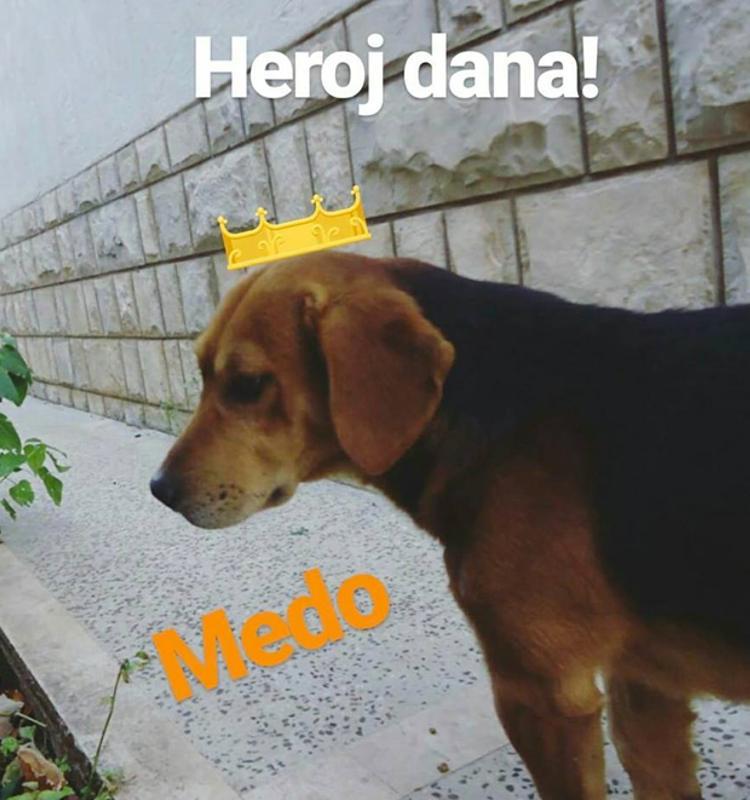 Perro callejero salva a una mujer