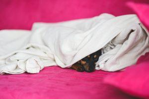 a mi mascota le gusta dormir bajo las sábanas