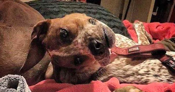 ¿Qué está mal en esta cara del perro?