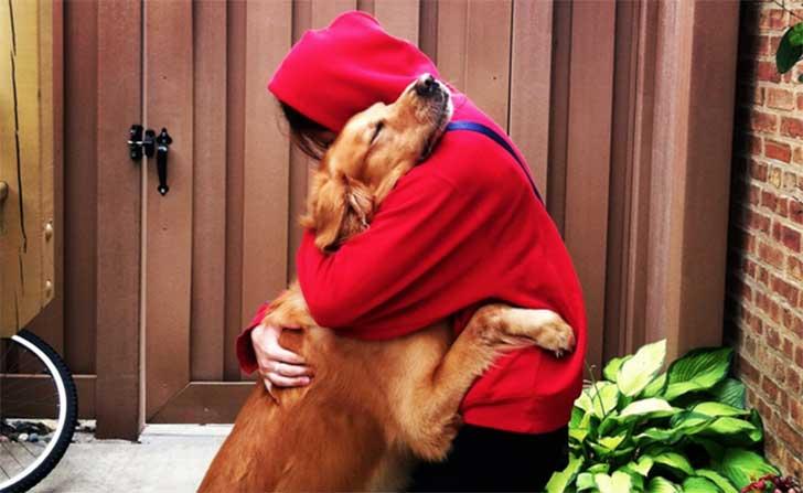 tu perro se vuelve loco cuando llegas a casa2