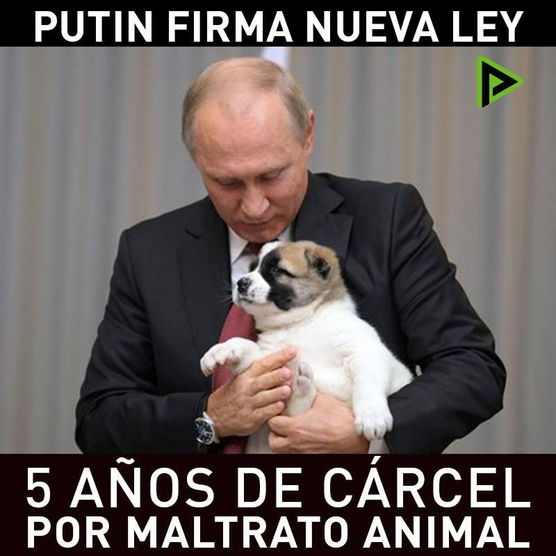 Maltrato animal en rusia
